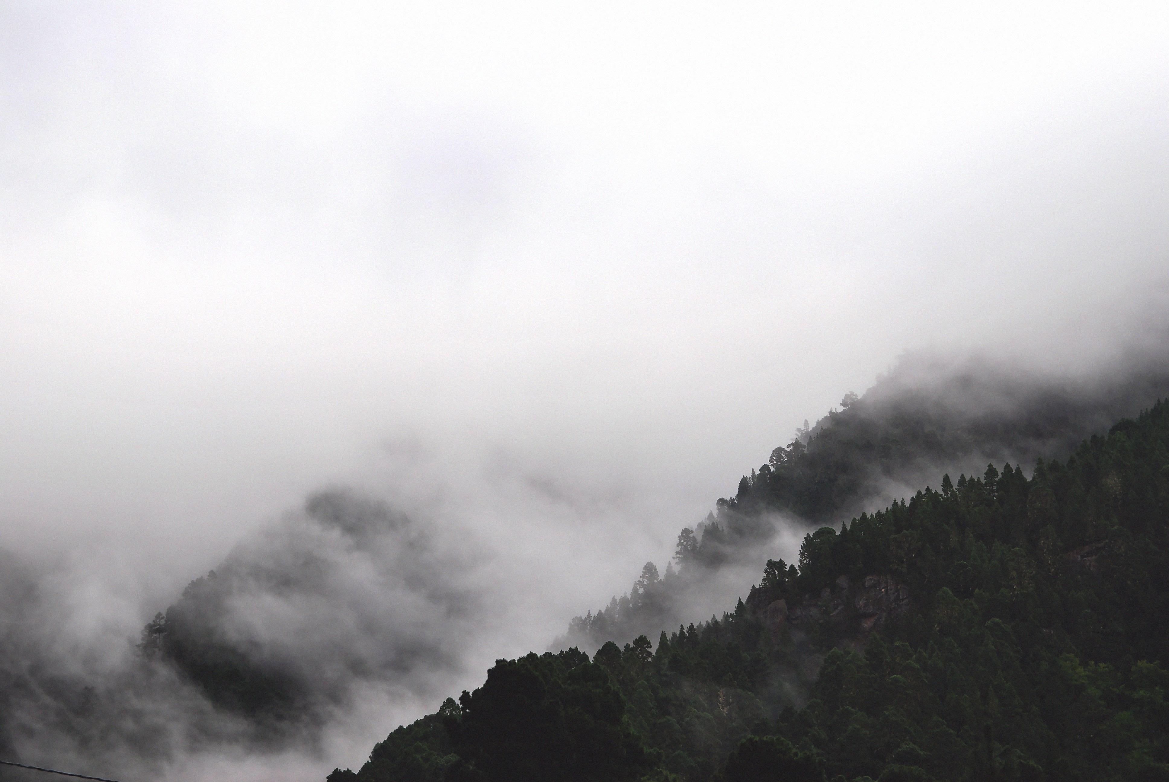 black and white fog foggy 234272 1